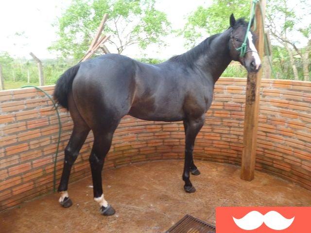 Don Venta | caballo, caballos, potros, potrillo, potrillos, yeguas